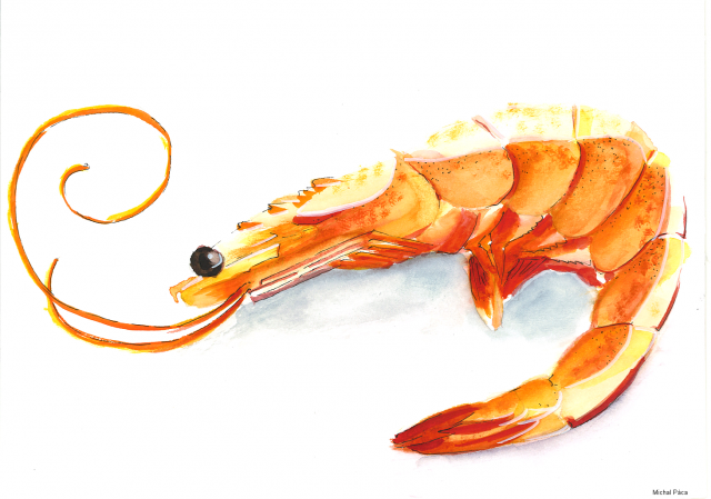 3_Shrimp